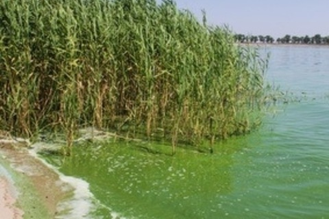 This Year's Warm Winter May Cause a Algae Blooms to Skyrocket
